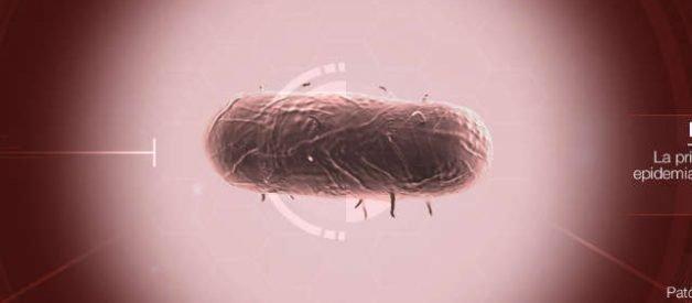 Bacteria en Plague Inc
